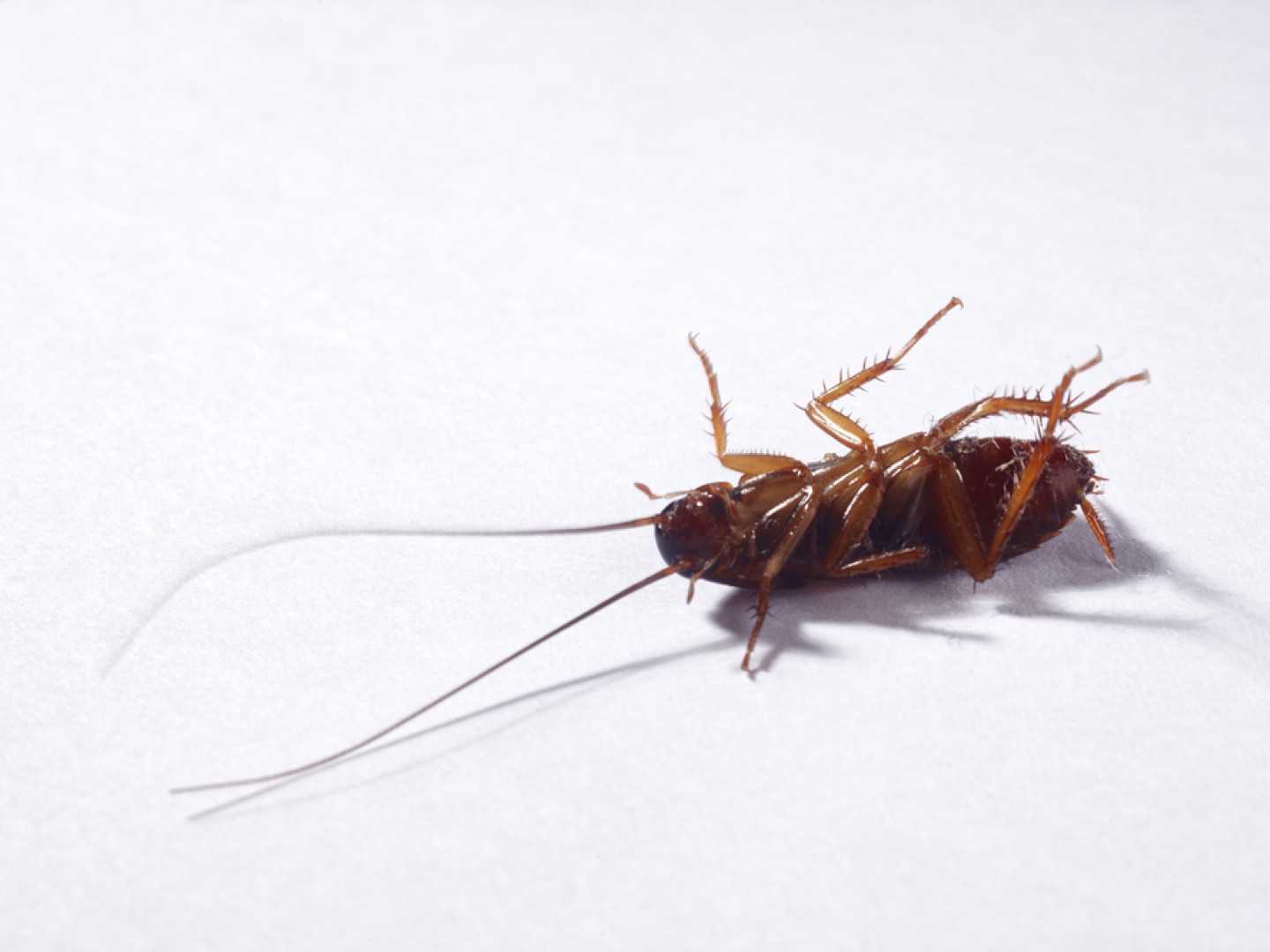 Stop roaches from running wild